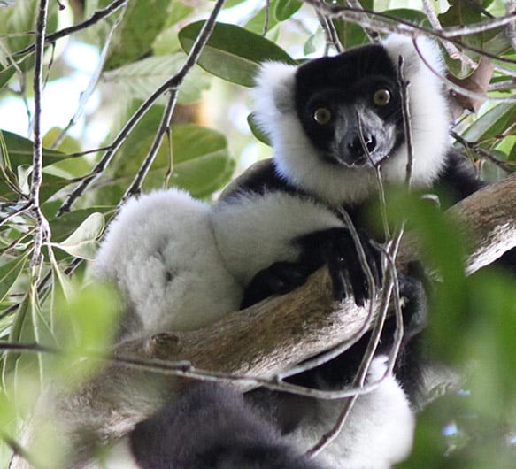 Photo of a lemur in Madagascar